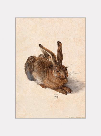 Passe Partout, Duerer, A Young Hare, 39x29cm